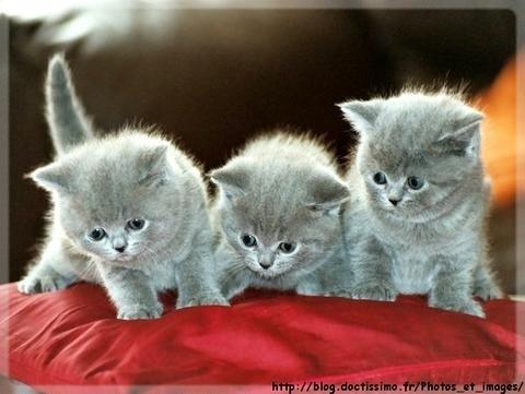 Chatons trop mignons - Image de chatons trop mignons ...